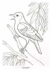Рисунок перелетные птицы