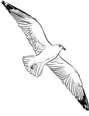 Рисунок Чайка