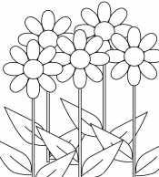Картинка Цветы на лугу