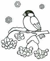 Снегирь на рябине