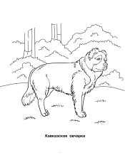 Кавказская овчарка