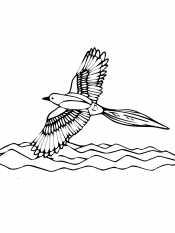 Летящая сорока