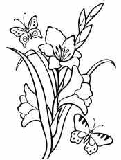 Гладиолусы с бабочками