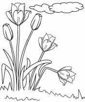 Тюльпаны и облака