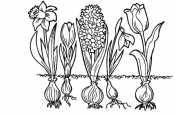 Картинка Весенние цветы
