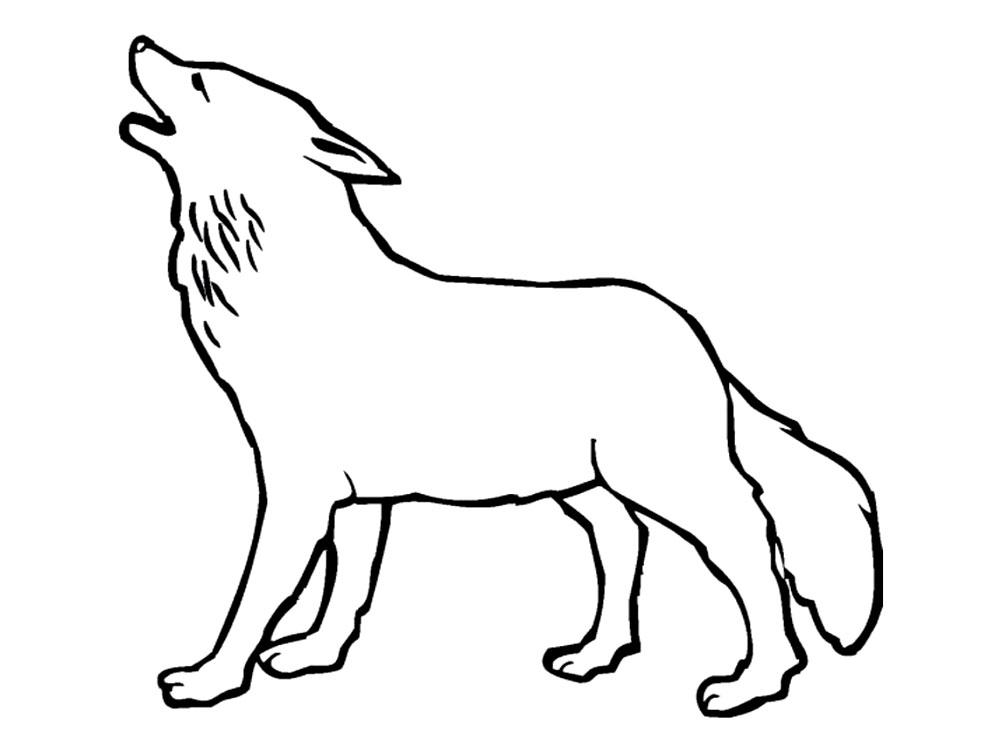 Картинки животных волк