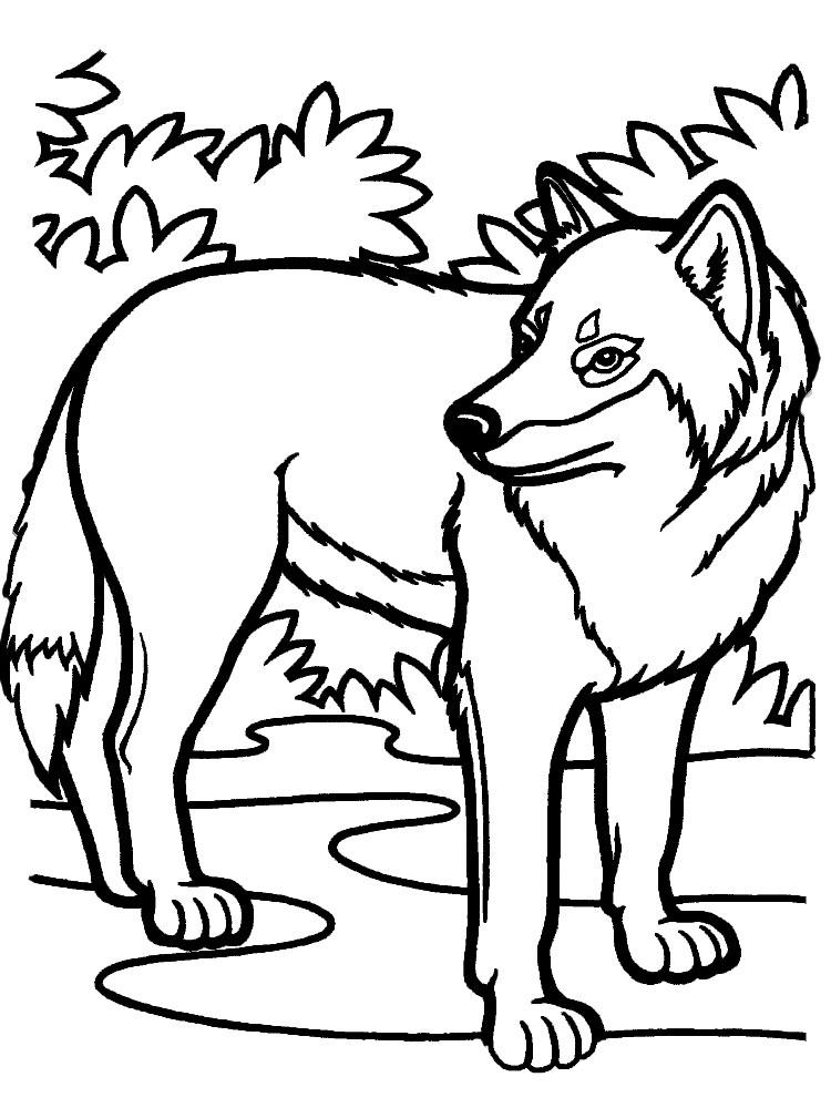 Волки раскраски для детей